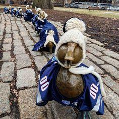 Someone dressed up the lil' duckies! #patriots #boston #bostonpublicgarden #ducks