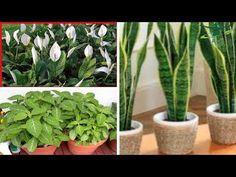 Atención Cuidado! Nunca Tengas Ninguna De Estas 5 Plantas Adentro De Tu Hogar - YouTube