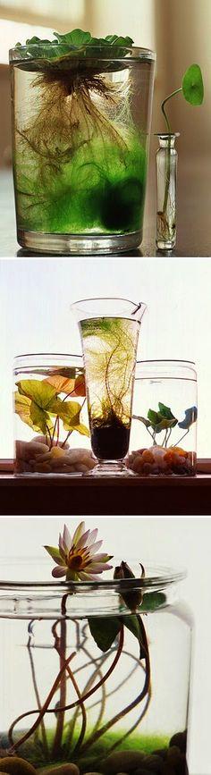 all-garden-world: Natural water gardens