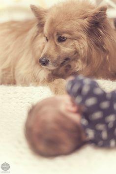 Kuinka esitellä vauva koiralle? / How to introduce dog and baby?
