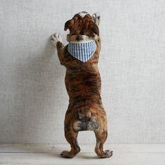 2 things i love!!! bulldogs and west elm!!!! ... west elm dog bandana