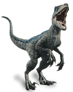 Watching Jurassic World right now, before I go to see Jurassic World: Fallen Kingdom. Jurassic World - Blue! Blue Jurassic World, Jurassic World Raptors, Jurassic World Fallen Kingdom, Dinosaur Drawing, Dinosaur Art, Raptor Dinosaur, Dinosaur Origami, Indominus Rex, Tyrannosaurus Rex