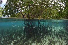 10 Important Marine Ecosystems: Mangrove Ecosystem