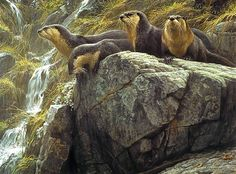Robert Bateman. On the Brink — River Otters