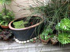 Die 268 Besten Bilder Von Miniteich Garden Backyard Ideas Und