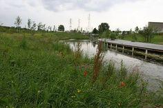 Le parc départemental du Chemin de l'Ile à Nanterre