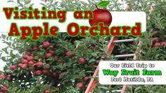 Apple Field Trip to Way Fruit Farm-- Port Matilda, PA--- Harry Kindergarten!!!!!