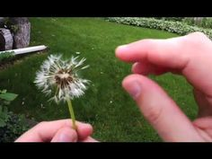 Andrew Vanden Heuvel explores the many interesting ways that seeds are… Science Videos, Science Lessons, Science Biology, Life Science, Teaching Plants, Seed Dispersal, Second Grade Science, Computer Class, Science Standards