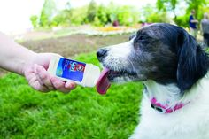 The Lickety Stik Gel gives your pup a low-cal, vitamin charged lickety treat! Slurp! Photo: Petsafe