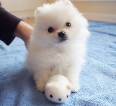 15 Fantastiche Immagini Su Cuccioli Di Cane Cubs Dogs E Cute Baby