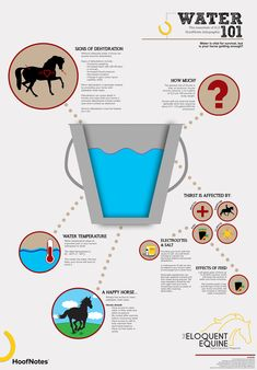 WATER 101 - A HoofNotes Infographic  Water is vital for survival, but is your horse getting enough?  Download the full image here: http://wp.me/p4GGrs-jf