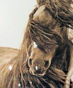 Wild horse of Sable island captured by Roberto Dutesco