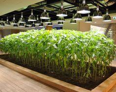 Urban Farm Pasona Group Tokyo, Japan 2010