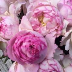 """#YvesPiagetRose  ; """"Pink Yves Piaget"""" garden rose. Oooooh, what a heavenly scent,  Easy available at www.parfumflowercompany.com"""