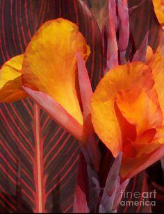 Canna Painterly Photograph- Chalet Roome-Rigdon