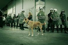 RIP Loukanikos, the fearless Riot Dog of Athens, who stood up to marauding police and did not shrink from rubber bullets or tear gas. Street Dogs, Athens, Police, Bullets, Fictional Characters, Law Enforcement, Bullet, Fantasy Characters, Athens Greece