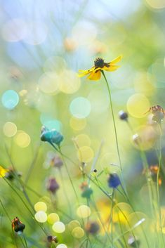 meadow flowers ✿
