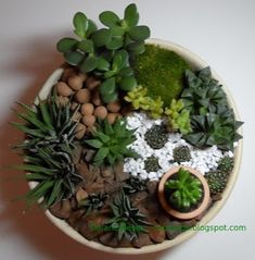 mini garden of succulents and cacti. mini garden Source by . Succulents In Containers, Cacti And Succulents, Planting Succulents, Cactus Plants, Planting Flowers, Cactus Decor, Cactus Art, Succulent Gardening, Succulent Terrarium