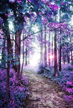 40 Fascinating Photographs Of Forest Paths To Another World Spannende Fotos von Waldwegen in die andere Welt Beautiful Landscapes, Beautiful Images, Beautiful Scenery, Simply Beautiful, Forest Path, Magic Forest, Amazing Nature, Pretty Pictures, Magical Pictures
