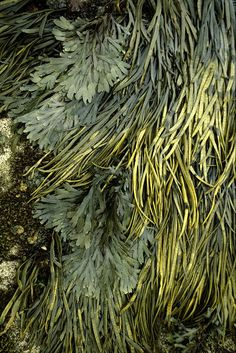 Texture and pattern: Seaweed Patterns In Nature, Textures Patterns, Tactile Texture, In Natura, Belleza Natural, Natural Texture, Seaweed, Natural World, Green Colors