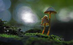 two snails atop a mushroom windowscenter.nl