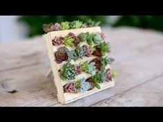 Popsicle Stick Mini Pallet w/ Succulents // Garden Answer - YouTube