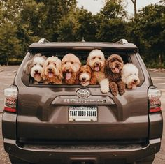 10 Fun Summertime Activities & Vacation Ideas For You And Your Dog - Funny Animals Cute Dogs And Puppies, Baby Dogs, I Love Dogs, Doggies, Dalmatian Puppies, Shitzu Puppies, Funny Puppies, Adorable Puppies, Cute Little Animals