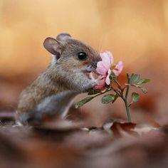 Cute Creatures, Beautiful Creatures, Animals Beautiful, Cute Little Animals, Cute Funny Animals, Nature Animals, Animals And Pets, Cute Mouse, Tier Fotos