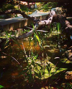 Devil's Bridge and Pond #pond #garden #gardenersnotebook #japanesegarden #storrierstearns #storrierstearnsjapanesegarden #nature #outdoors #bridge