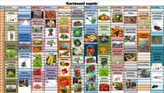 Herb Garden, Infographic, Herbs, Green, Vegetables, February, Infographics, Herbs Garden, Veggies