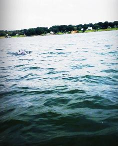 Dolphins out to play! Virginia