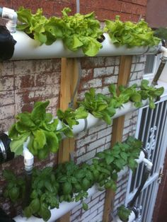 Continuous Flow Aquaponic wall systems