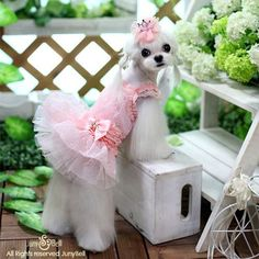 Small and X-small dog dresses, harness dresses and dog clothes for teacup, toy dog breeds, puppies and other small dogs. Dog Tutu, Best Dog Toys, Pet Dogs, Pets, Dog Clothes Patterns, Pet Fashion, Puppy Clothes, Girl And Dog, Dog Harness