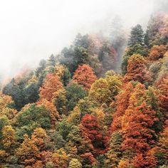 Autumn in Austria! #seasons #fall #outono #autumn #fallseason #leaves #coloursofautumn @modernoutdoors