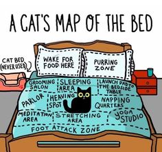 Funny cat map of the bed for cat lovers and owners. Amazing detail of how cats perceive us as they own pet and think they own us. Cute Funny Animals, Funny Animal Pictures, Funny Cute, Cute Cats, Funny Kitties, Funny Cats And Dogs, Crazy Cat Lady, Crazy Cats, Funny Cat Memes
