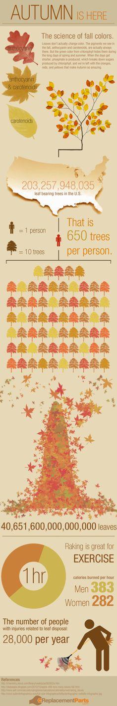 Autumn visualized w/ leaf raking injury statistics as well