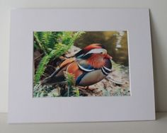 Mandarin Duck - Now available at my store on http://ecraftandshare.com/inspiringfotos/