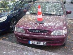 Машины и голуби