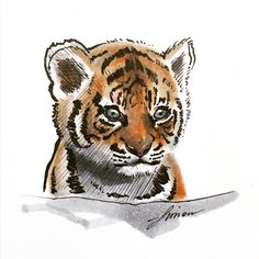 HERE'S NUMBER One of the most beautiful animals on earth, but my worst drawing so far 😀 # Bad Drawings, Drawing Sketches, Tiger Drawing, Number 15, Cute Tigers, Most Beautiful Animals, Art Daily, I Am Bad, Faber Castell