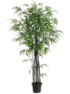 5' Black Bamboo Tree w/1280 Leaves in Black Plastic Pot Black (Pack of 2) -- Learn more by visiting the image link.