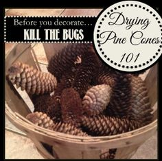 How to dry pinecones so you can use them for pine cone crafts and decor #DIY #pinecones #pineconecrafts #pineconedecorations #pineconedecor
