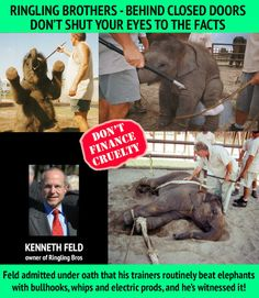 DON'T SHUT YOUR EYES TO THE FACTS #RinglingBros ABUSE ANIMALS #BoycottRinglingBros pls sign&RT http://www.change.org/petitions/ringling-brothers-stop-circus-elephant-abuse-remove-all-animals?recruiter=22043277&utm_campaign=twitter_link_action_box&utm_medium=twitter&utm_source=share_petition … pic.twitter.com/BMiQBrOrvM