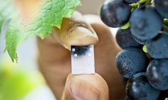 Tiny, cheap water-sensing chip outperforms larger, pricier sensors By Ben Coxworth October 2013 One card can reportedly last outdoors for at least a few years, although freezing temperatures may cause it break Garden Irrigation System, Irrigation Systems, Modern Farmer, Astronomy Science, Plant Stem, Inside Plants, Inside Job, Water Plants, Science