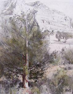 "Lane Hall: ""Juniper at Sedona"" 8 x 6"" original gallery wrap (wood) gesso & graphite on board"