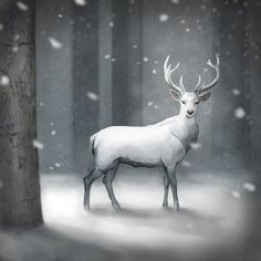 White Stag Drawing | White Stag Art Print