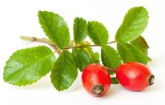 Health Benefits of Rose Hips | Organic Facts