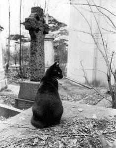 #cats #cat #black cats #mystic animals #dark arts #tombstones #animals in art