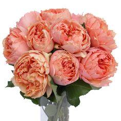 Salmanasar Garden Rose1 350 ceeb1cd2