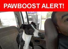 Please spread the word! Ace was last seen in Pueblo, CO 81001.    Nearest Address: Near Jerry Murphy Rd & Bonnymede Rd