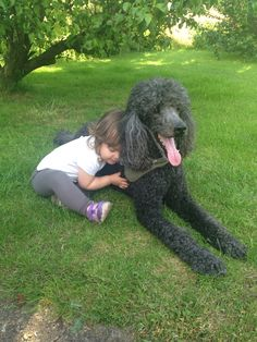 My baby Cousin loves my Poodle, Harvey.